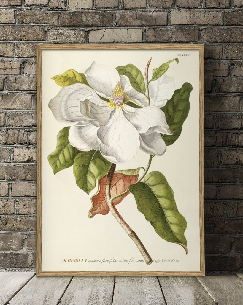 Affiche 30x40 Magnolia - THE DYBDAHL