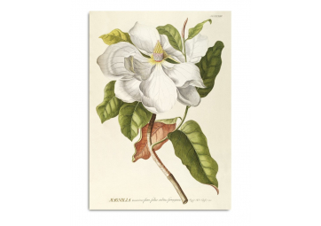 Affiche Magnolia 30x40 - THE DYBDAHL