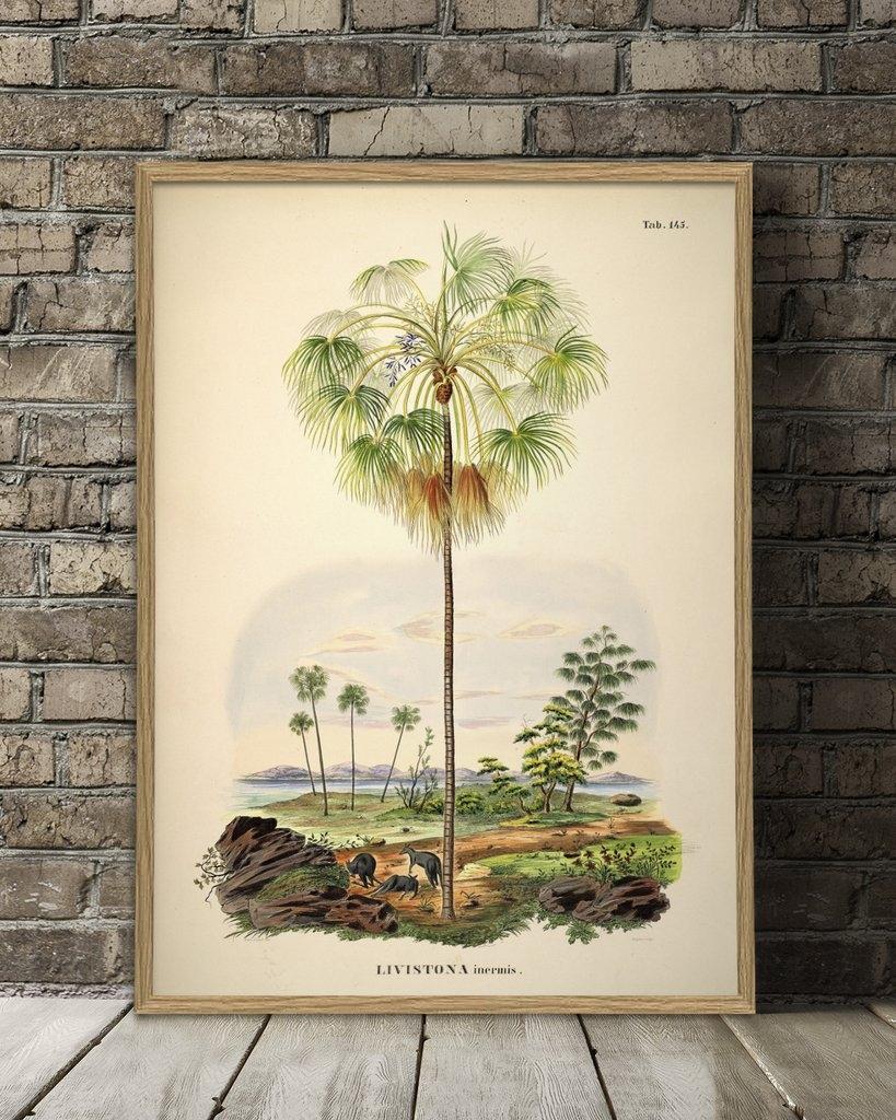 Affiche 70x100 Palmier et paysage - THE DYBDAHL