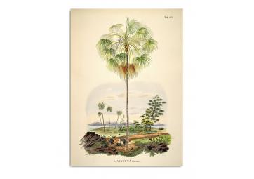 Affiche Palmier et paysage 70x100 - THE DYBDAHL