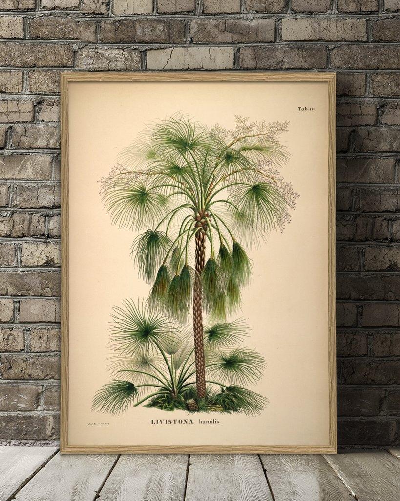 Affiche 70x100 Palmiers - THE DYBDAHL