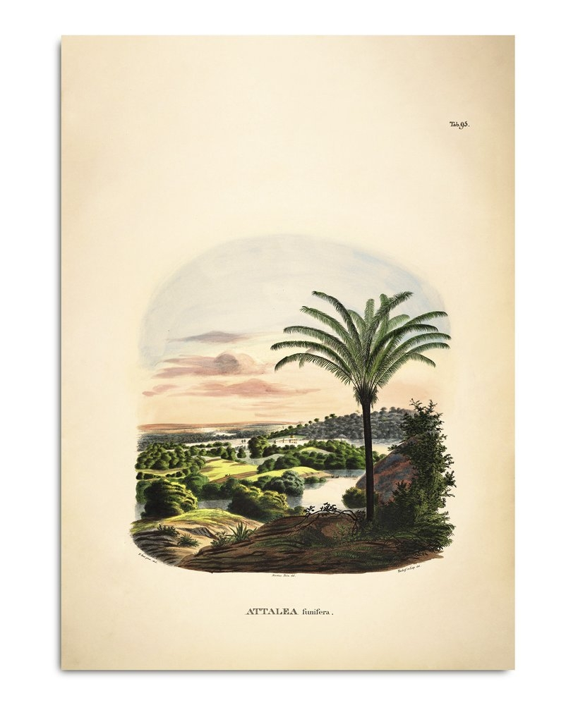 Affiche Attalea 50x70 - THE DYBDAHL
