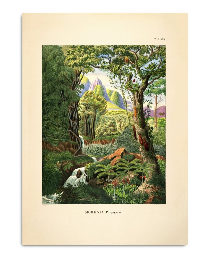 Affiche Forêt tropicale 50x70 - THE DYBDAHL