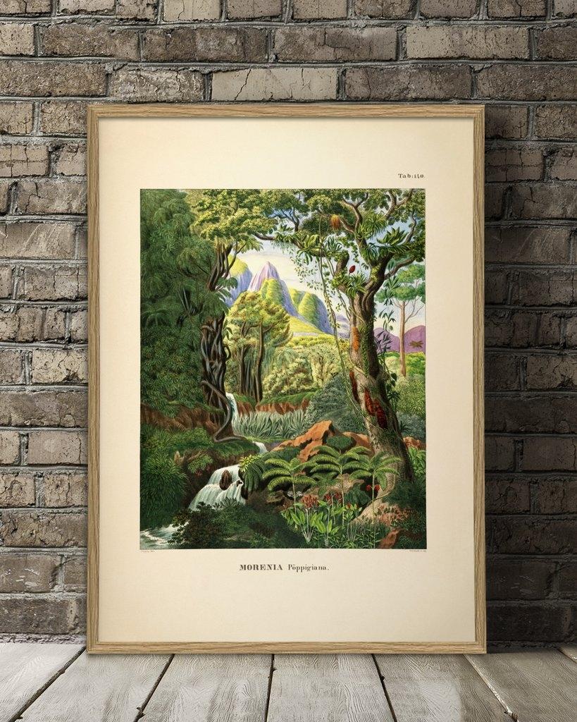Affiche Forêt tropicale 50x70 - THE DYBDAHL