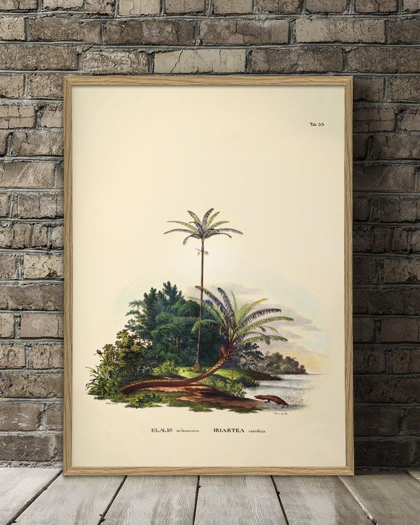 Affiche Palmiers/Crocodile 50x70  - THE DYBDAHL
