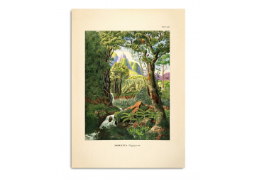 Affiche Forêt tropicale 30x40 - THE DYBDAHL