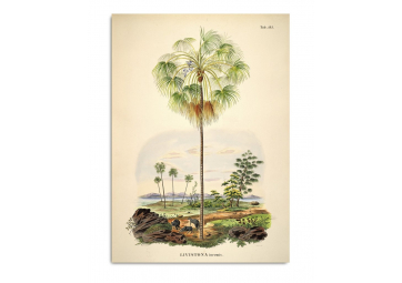 Affiche Palmier et Paysage 30x40cm - THE DYBDAHL