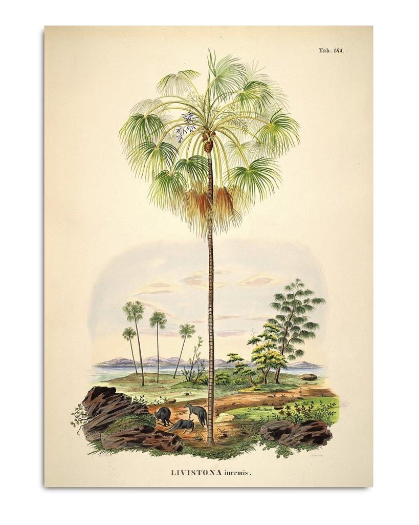 Affiche Palmier et Paysage 50x70cm - THE DYBDAHL
