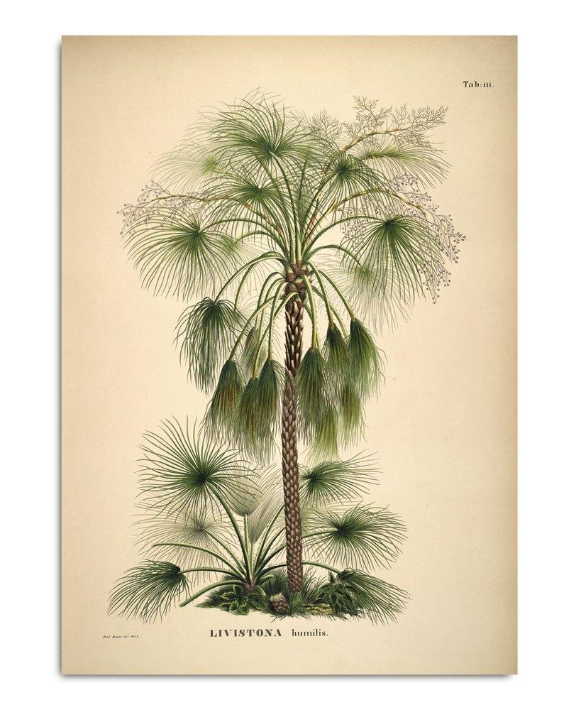 Affiche Palmier 50x70cm - THE DYBDAHL