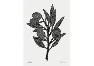 Affiche branche d'olivier - MONIKA PETERSEN