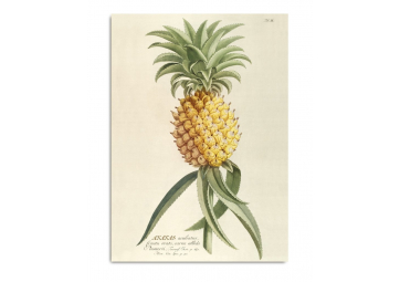Affiche Ananas 50x70cm - THE DYBDHAL