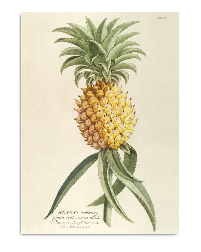 Affiche Ananas 50x70cm - THE DYBDHAL