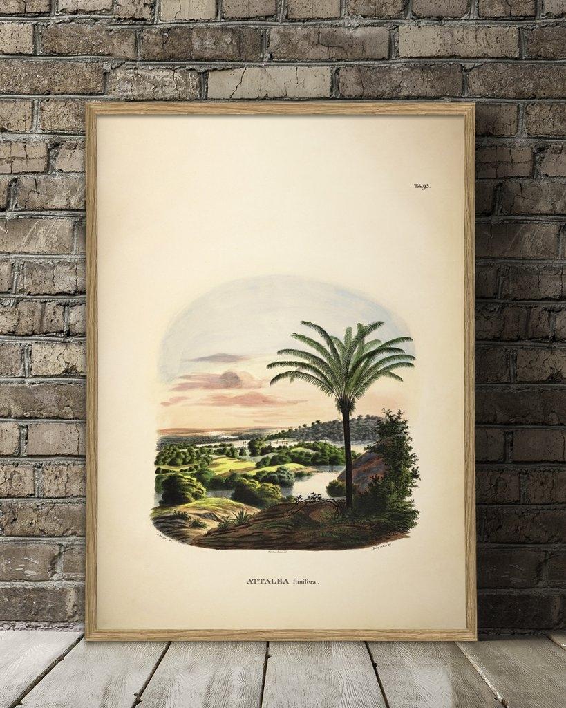 Affiche Attalea 70x1000 - THE DYBDAHL