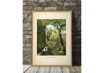Affiche Forêt tropicale 70x100 - THE DYBDAHL