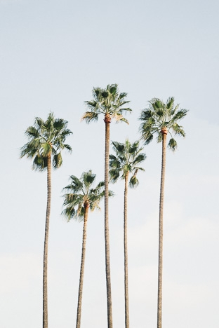 Poster Regal Palm Trees 70x100cm - DAVID & DAVID
