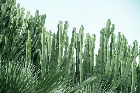 Poster Cactus Forest 70x100cm - DAVID & DAVID