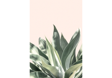 Poster Light Pink Aloe - DAVID & DAVID