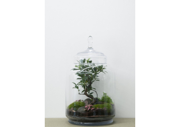 Terrarium Jungle Jar Bonsaï Ficus - GREEN FACTORY