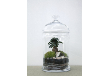 Terrarium dôme S  Ficus - GREEN FACTORY