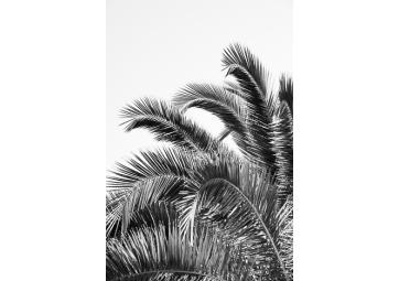 Poster feuille de palmier noir et blanc - DAVID & DAVID