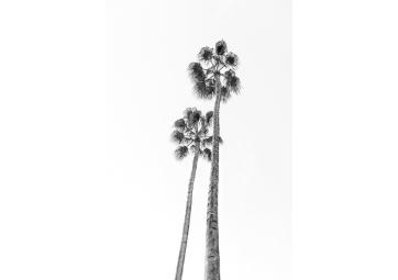 Poster palmier noir et blanc - DAVID & DAVID