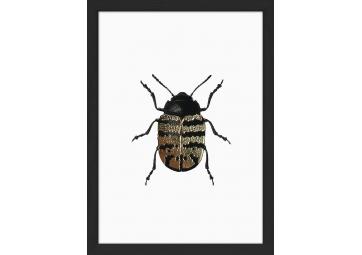 Affiche encadrée scarabée doré - THE DYBDAHL