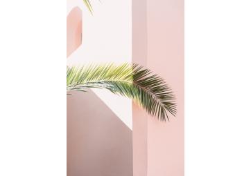 Poster Pink Palm 70X100cm - DAVID & DAVID