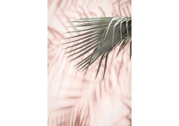 Poster Pink Palm n°2 - DAVID & DAVID