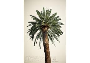 Poster Grands palmiers N°2 - DAVID& DAVID