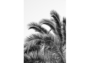 Feuilles de palmier noir et blanc - 30x40 - DAVID & DAVID