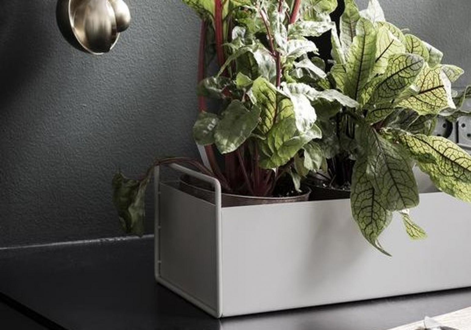 Plant box small noir - FERM LIVING